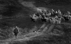 «Сельские будни» Александр Визиров