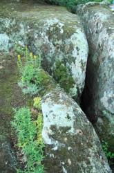 Жемчужина южной степи Трикраты. Любовь Савельева.